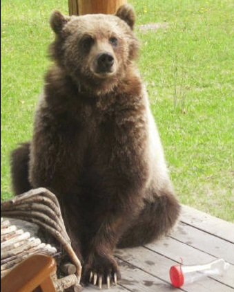 Patti Bear