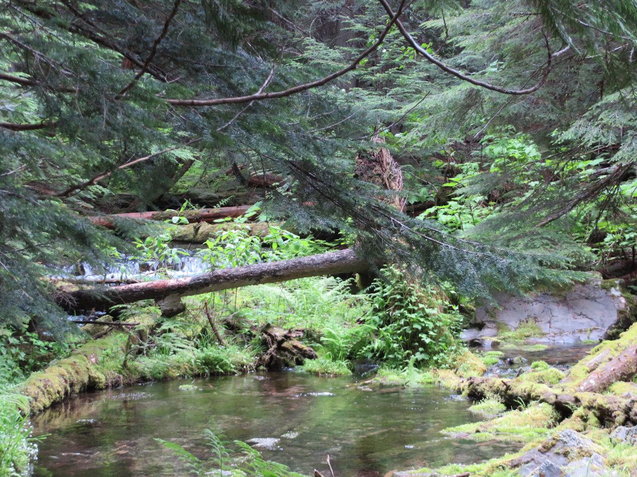 Ross Creek Cedars Area, Kootenai NF - W. K. Walker