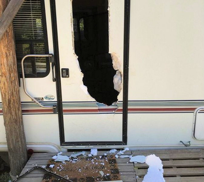 An adult female grizzly broke into three campers on private property south of Red Meadow Creek, July 28, 2016 - via Montana Fish, Wildlife & Parks