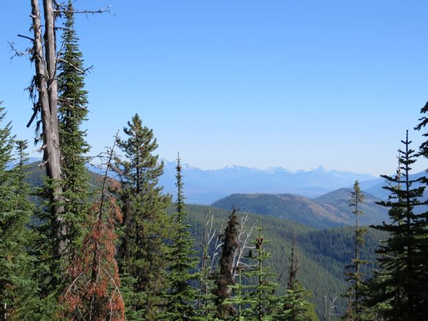 Trail 4 - view near ridge top