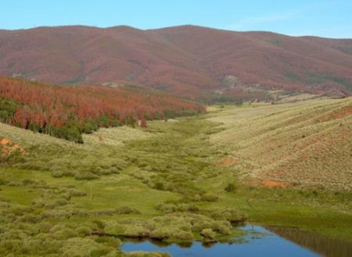 Northern Williams Range, Colorado, where mountain pine beetles have killed more than 80 percent of mature lodgepole pine over many square kilometers - USGS