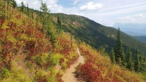 Huckleberry shrubs turn bright red in fall - USGS photo